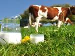 latte mucca generica