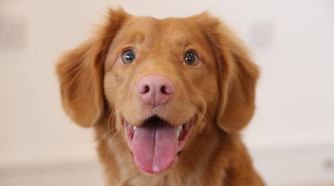 cane generica