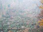 alberi marguareis vento forte bosco distrutto