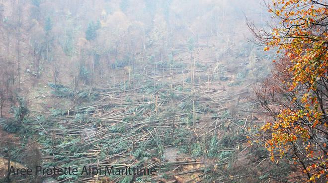 alberi-marguareis-vento-forte-bosco-distrutto-6463