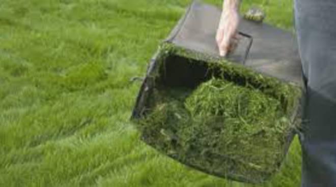 raccolta verde