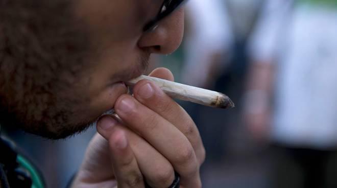 canna marijuana
