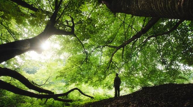 natura bosco alberi