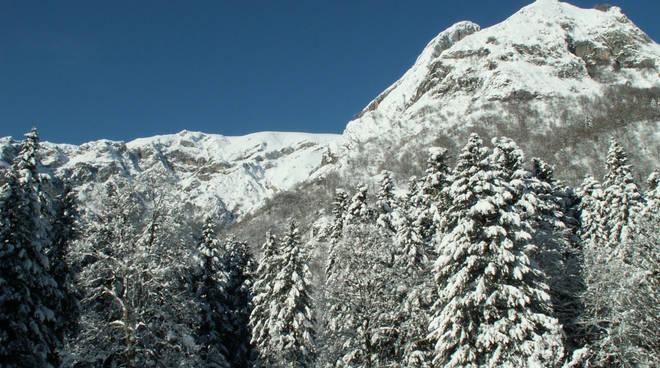 paro marguareis neve bosco montagna