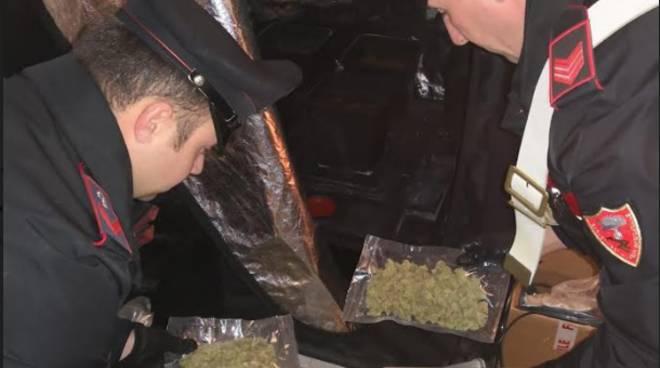 carabinieri borgo san dalmazzo marijuana