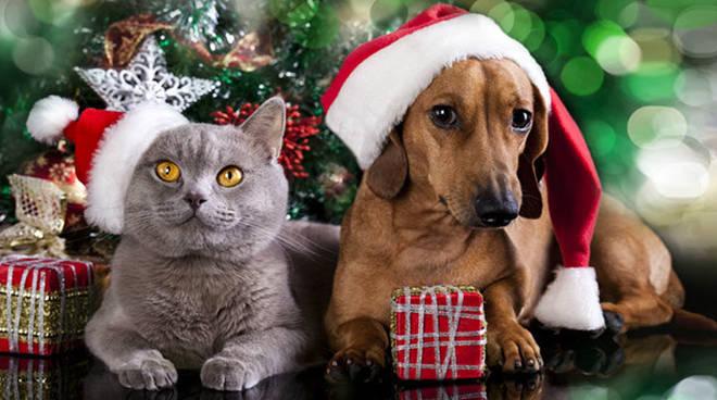 cane gatto feste