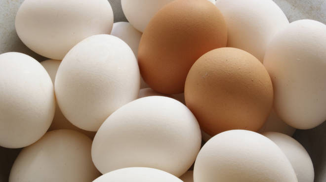 uova uovo generica