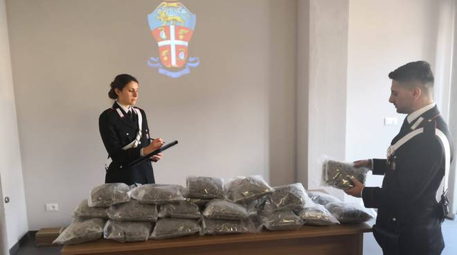 carabinieri marijuana borgo san dalmazzo