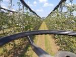campo mele frutteto
