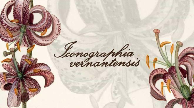 iconografia vernatensis