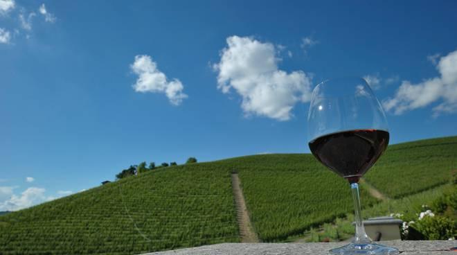 Progetto Vino barolo