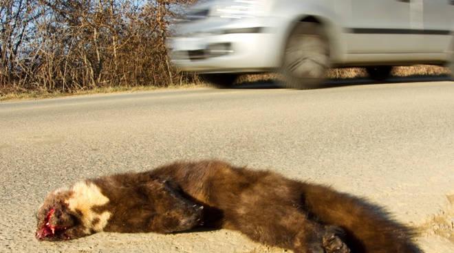 road kill morti strada