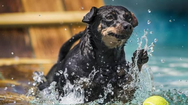 porta della langa piscina cani