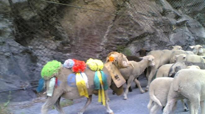ritorno dall'alpe pontechianale