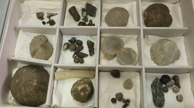 """fossili donati al """"Craveri"""""""