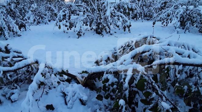 neve nocciole
