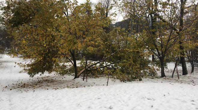 castagno danni neve