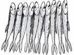 sardine-cuneo-18869