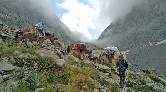 muli rifugio morelli