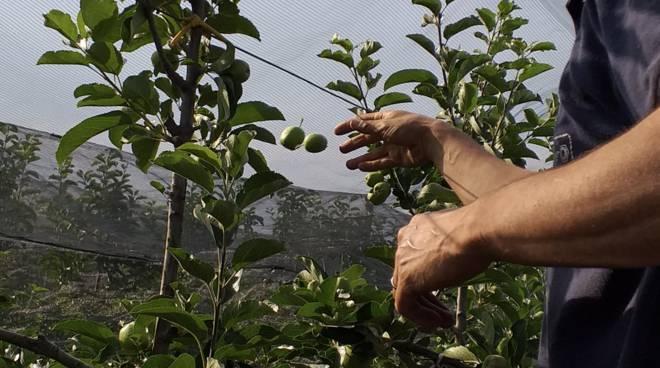 azienda agricola frutteto caporalato