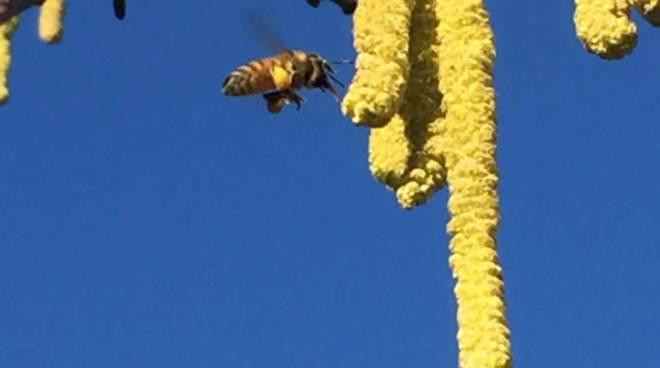 api scuola forestale ormea