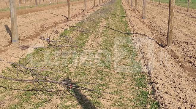 campo piante lavoro frutteto