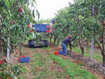 lavoro frutteto