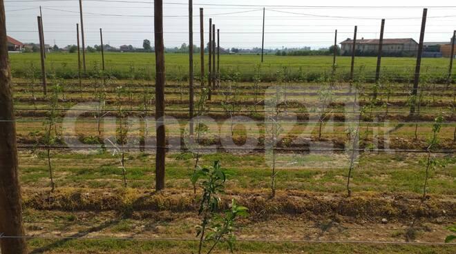 agricoltura frutteto lavoro campi