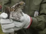 Centro recupero animali selvatici