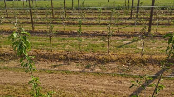 lavoro frutteto agricoltura