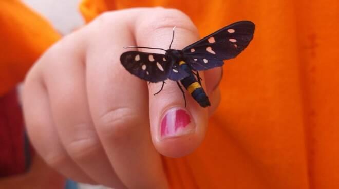 farfalla estate ragazzi