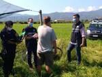 carabinieri controlli lavoro frutta saluzzese