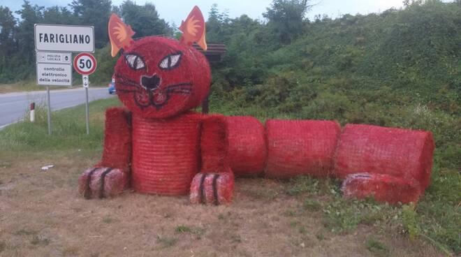 Gatto rosso Farigliano