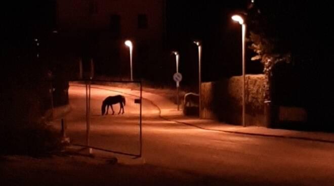 Cavalli a Vicoforte
