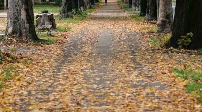 Viale angeli autunno
