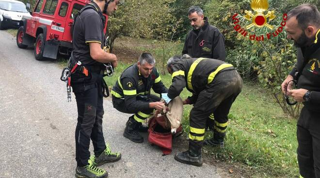 Cane recuperato a Rocchetta Belbo