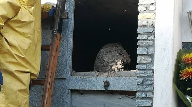 cimitero peveragno vespe vigili fuoco