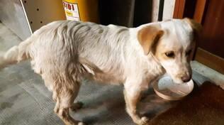 cane smarrito cucciolo beinette
