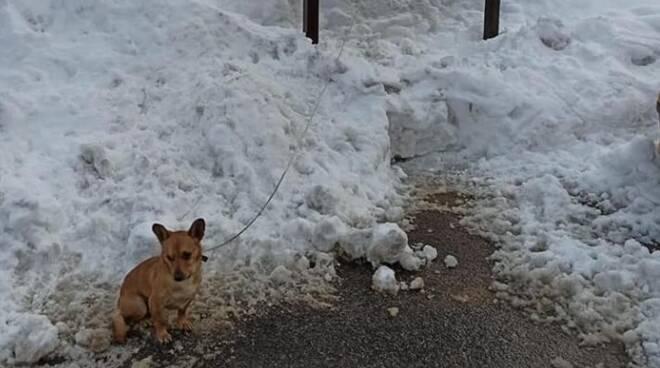 cane legato a Villanova Mondovì