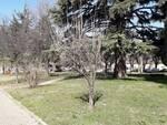 giardini skatepark Mondovì