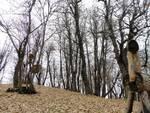 sorprese artistiche colline peveragnesi