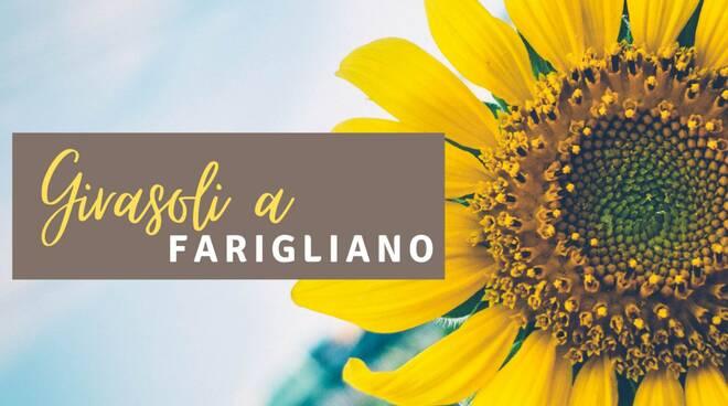Girasoli a Farigliano