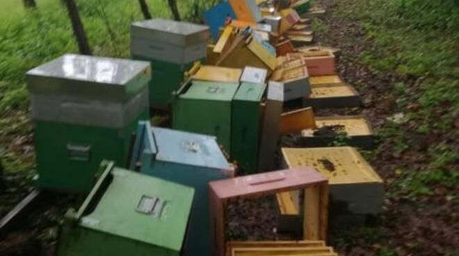 apiario mattia landra
