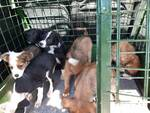 Cuccioli abbandonati Riforano