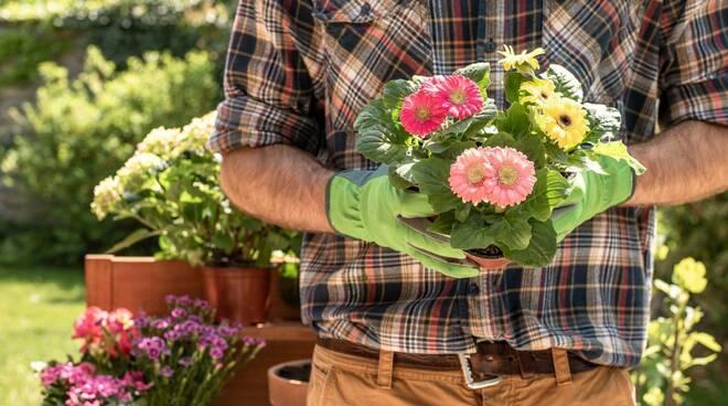 giardiniere free