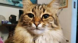 Lisa gatta spinetta