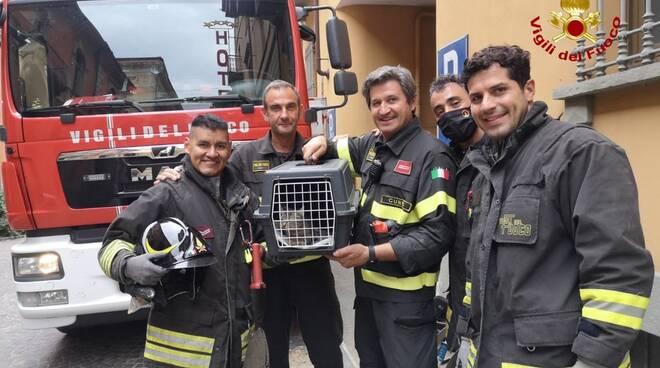 gattino incastrato salvato vigili fuoco alba